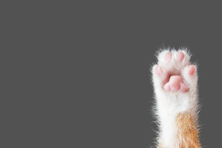 Pet Foster Q&A