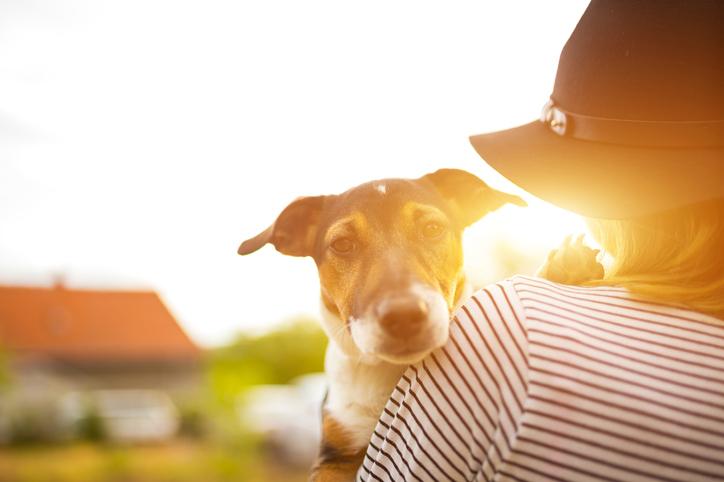 Surrendering Your Pet